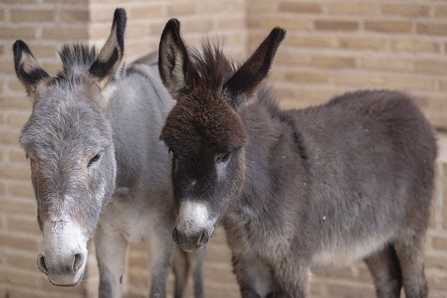 beer burro insurance